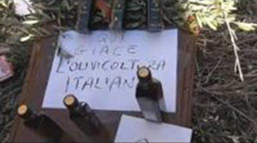 qui giace l'olivocultura italiana