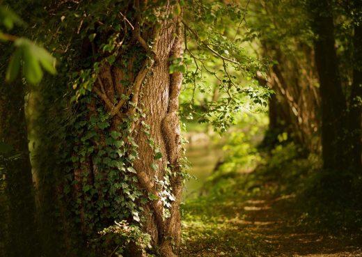 Foresta in primavera